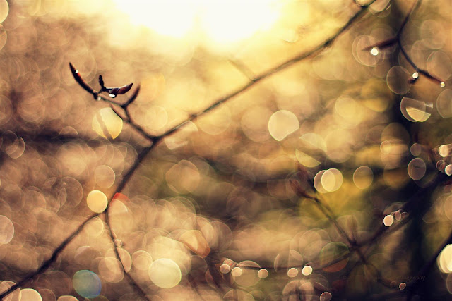Abstract Artistic image, branches bathing in sunlight