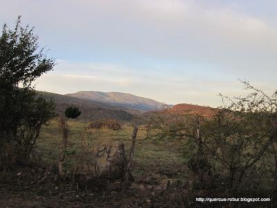 La cima del Cerro Viejo desde San Juan Evangelista