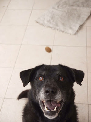 Shadow waiting to catch a treat