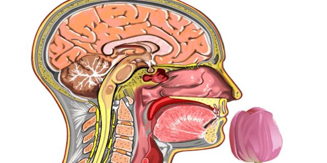 anosmia-hyposmia-cacosmia-hyperosmia