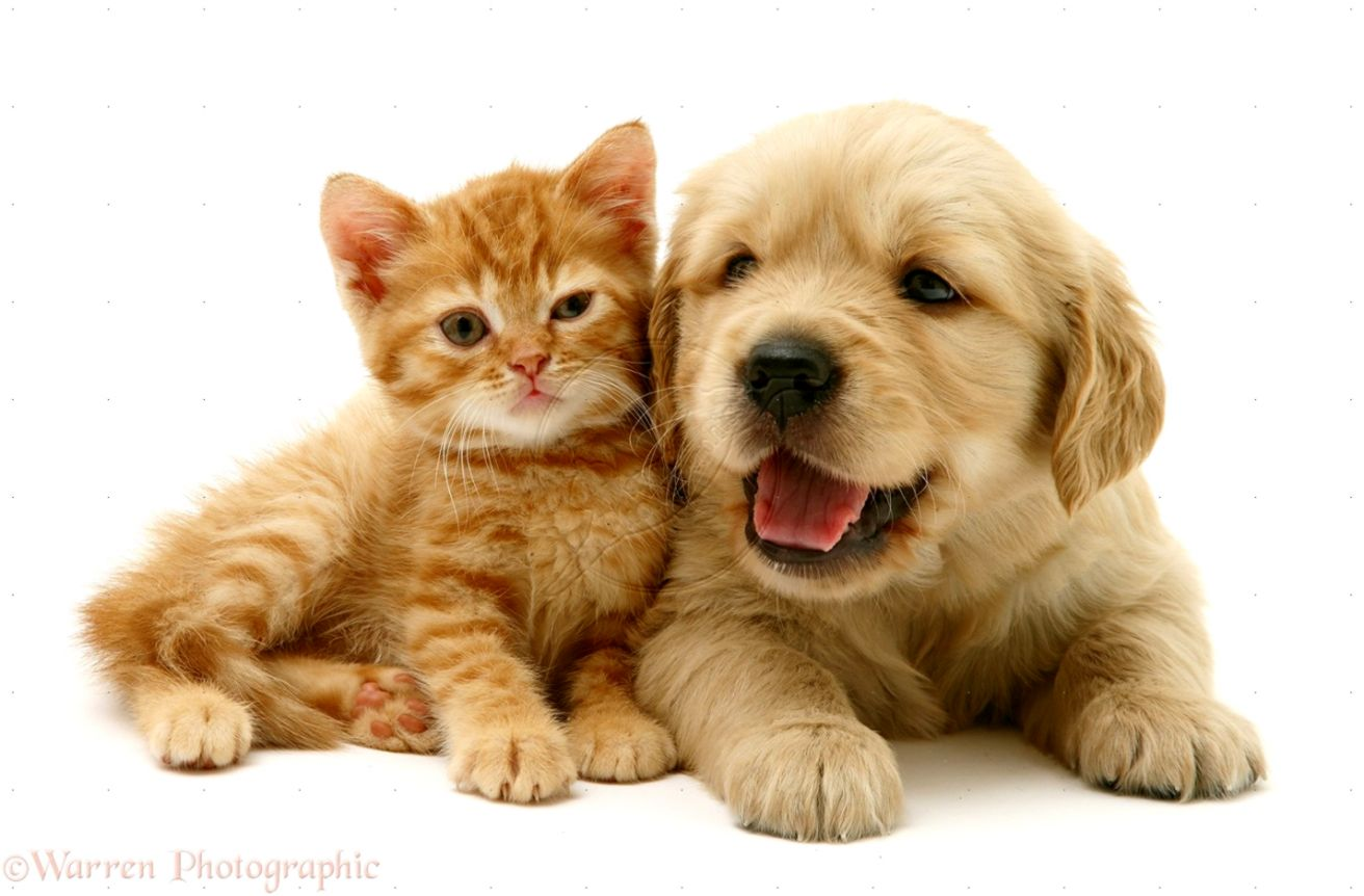 Super Cute Puppies And Kittens Pict Animal Beautiful Furry
