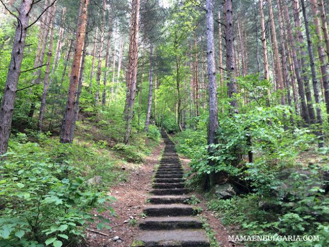 Bosque cascada Goritsa Ovcharenski Rila Bulgaria