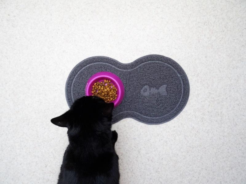 L'île aux Chats gucci le chat tapis gamelle