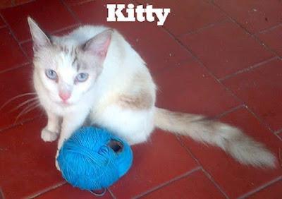 gatos-amigos-magico-mundo-felino-niki