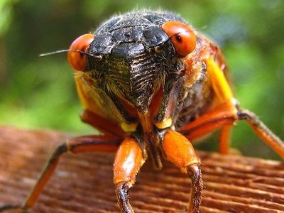 Cicada Invasion Survival Guide: Cicada News Story on Channel