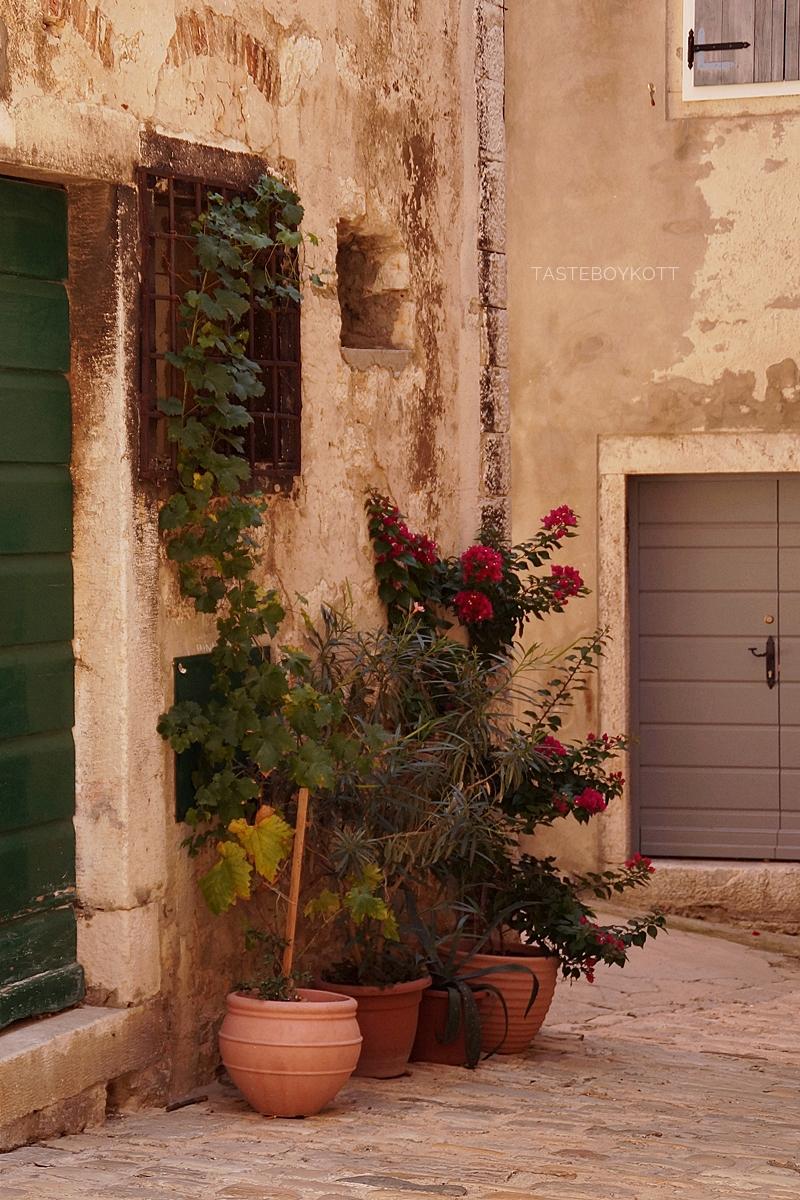 Pflanzen in einer der bezaubernde Gassen in der Altstadt von Rovinj, Kroatien.