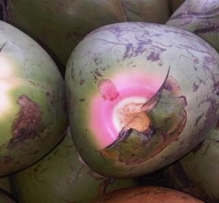 Kelapa ijo manfaat bagi kesehatan