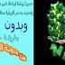 حصريا زيادة ارباحك فى موقع adyoume(اديومى) وتحديد مصدر الزيارة مجانا وبدون حظر من مصطفى الخطيب