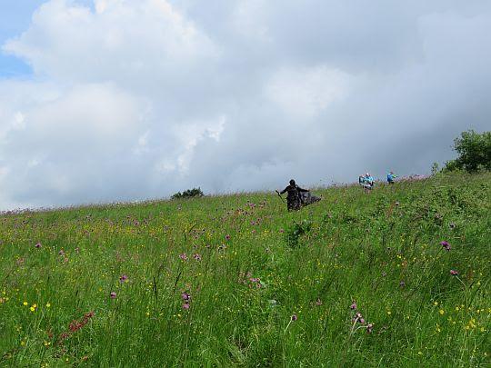 Przez kwiecistą łąkę.