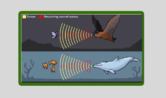 Jawaban jenis bunyi berdasarkan frekuensi