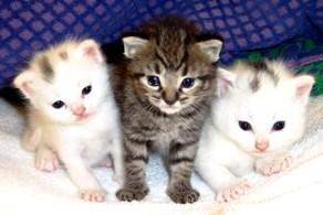 Foto de gatos bebés