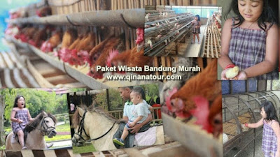 Jendela-Alam-Tempat-Wisata-Edukasi-Anak-di-Lembang-Bandung
