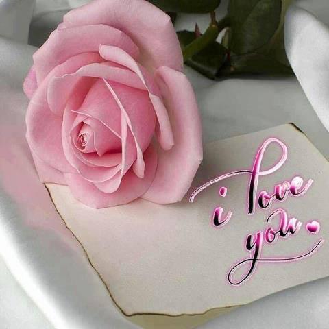 download besplatne slike za mobitele 480x480 čestitke Valentinovo dan zaljubljenih Happy Valentines Day