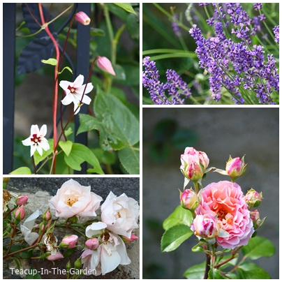 teacup in the garden clematis und rosen. Black Bedroom Furniture Sets. Home Design Ideas