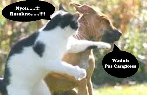 foto kucing dan anjing berkelahi paling lucu