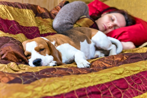 Never Let Your Pets Sleep With You Because This Could Lead To Something Deadly!