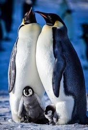 Snow Chick: A Penguin's Tale (2015)