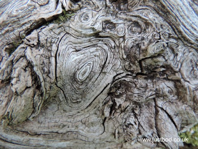 Wood Whorl In Oak photo by Justbod