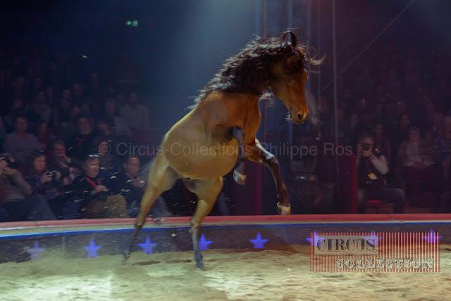 le saut du cheval brun