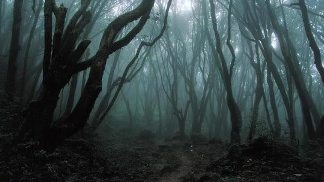 hutan yang penuh misteri dan menakutkan