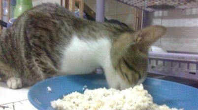 Kuliner Untuk Kucing Kesayangan Anda