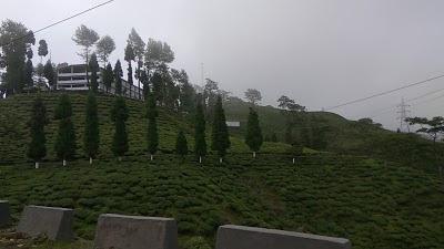Thurbo Tea Estate Factory