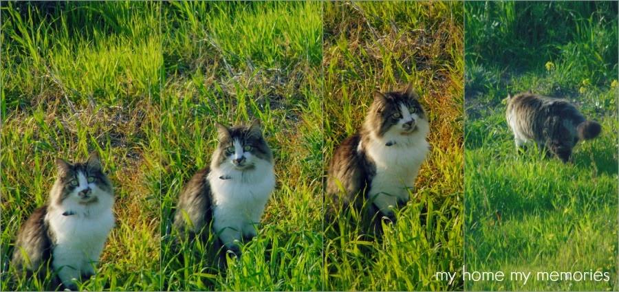 γατος-πονηρος