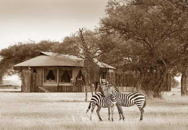 The Ultimate Luxury Safari│Tanzania 23