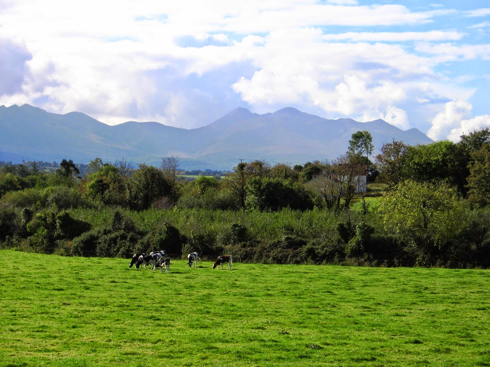 Field north of Killarney in County Kerry Ireland