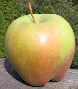 a Candy Crisp apple