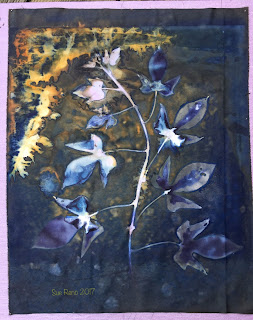 Wet Cyanotype_Sue Reno_Image 60