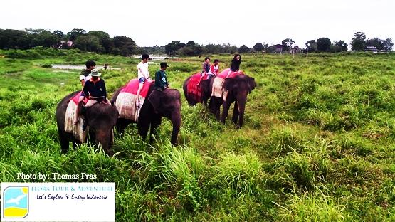 paket tour gajah way kambas