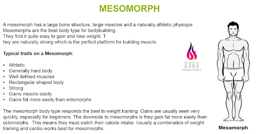 Article # 596. MESOMORPH BODY TYPE
