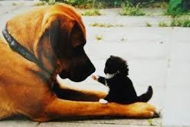 foto tierna de perro y gato