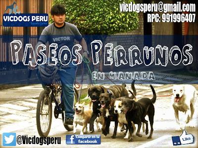 Paseos anti estress para perros en Lima