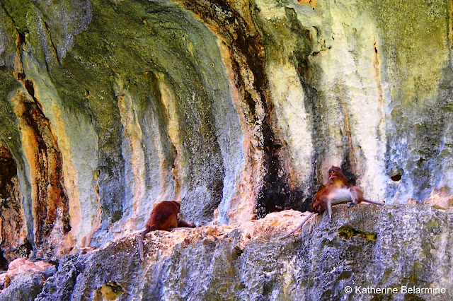 Hong Monkey Run, Phang Nga Bay, Thailand