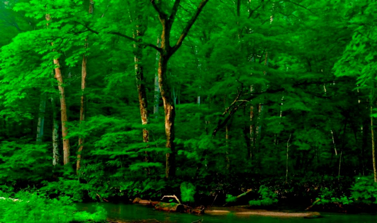 Green Tree Hd Wallpaper 1080p Smart Wallpapers