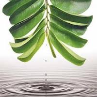 Cara Alami Menyembuhkan Kardiomiopati Dilatasi