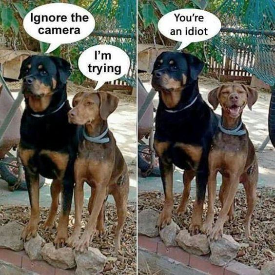 Funny Ignore The Camera Dog Joke Picture