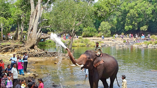 Elephant is Spraying Water over Visitors, Dubare Elephant Camp, Coorg