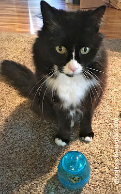Maggie the cat with her exerciser cat toy