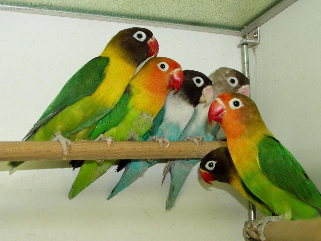 the lovebirds - photo #42