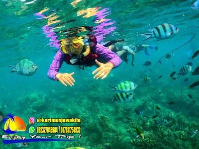 aktivitas snorkeling di karimunjawa