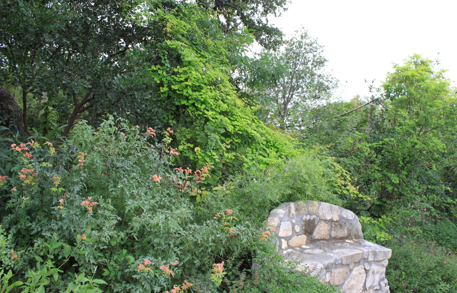 Rock Oak Deer Medina Garden Nursery