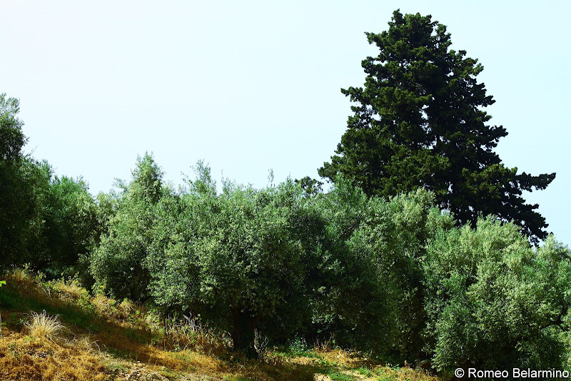 Anoskeli Olive Groves Things to Do in Crete