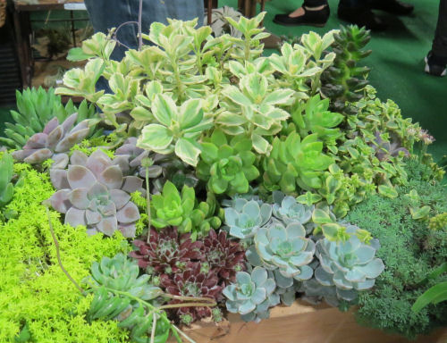 Fort Wayne Home and Garden Show succulents