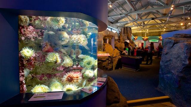 Monterey Bay Aquarium em Monterey na Califórnia