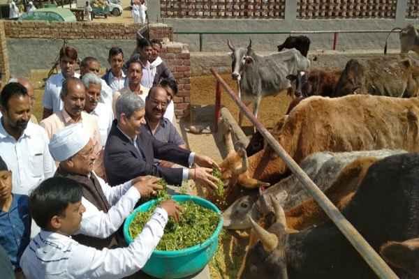 हरियाणा की 277 गौशालाओं में लगेंगे सौर ऊर्जा प्लांट, सरकारी वित्तीय सहायता वितरित: राम मंगला