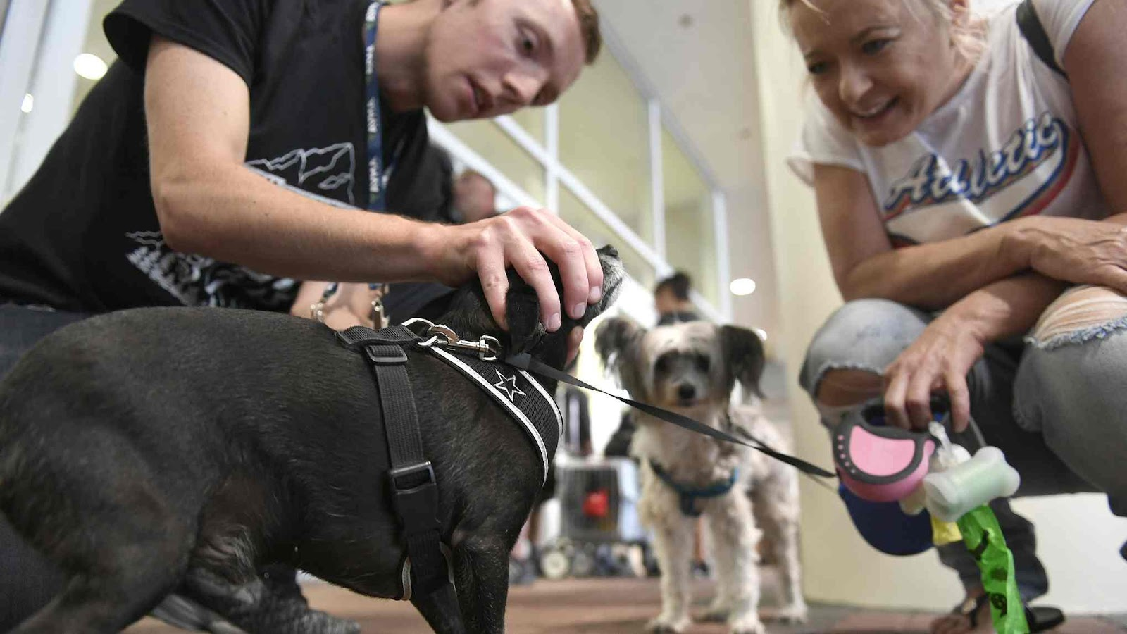 Veterinarians in Denver provide free treatment for pets of homeless people