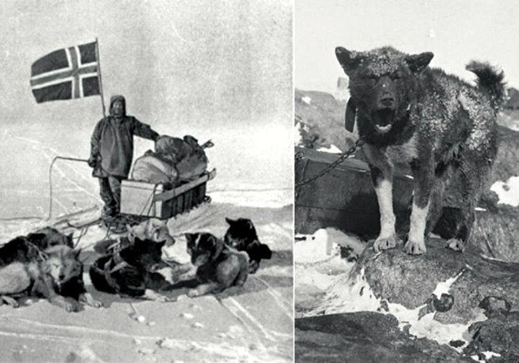 Kızak köpekleri var gücüyle koşuyordu ama açlık yüzünden bitkin düşmüşlerdi.